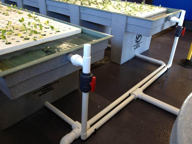 Aquaponics-Grow-Bed-Tank