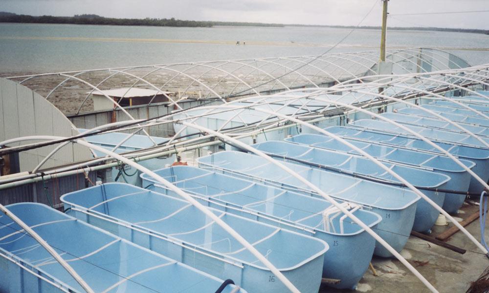 Parabolic-Aquaculture-Tanks-for-Hatchery