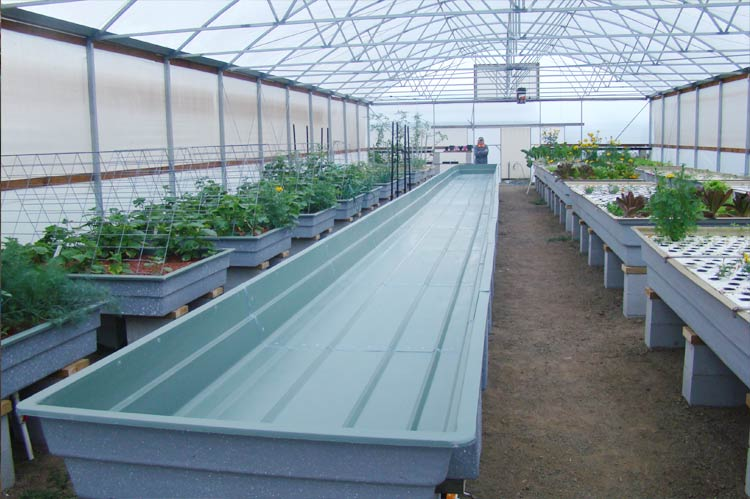 Aquaponics-Grow-Beds